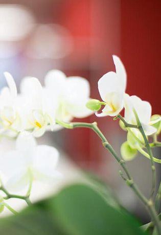 Bild einer Pflanze aus dem Warteraum